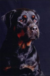 Bilan éducatif et éducation canine